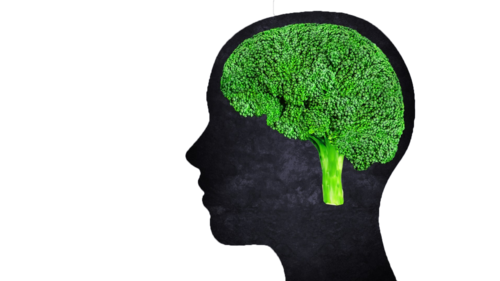 Graphic of broccoli as the human brain