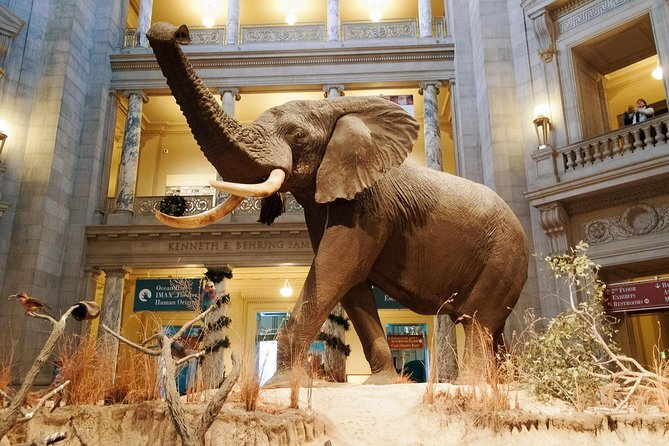 A taxidermy elephant with its trunk raised above its head in the American Museum of Natural History