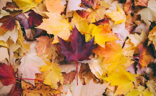 A pile of colorful fall leaves