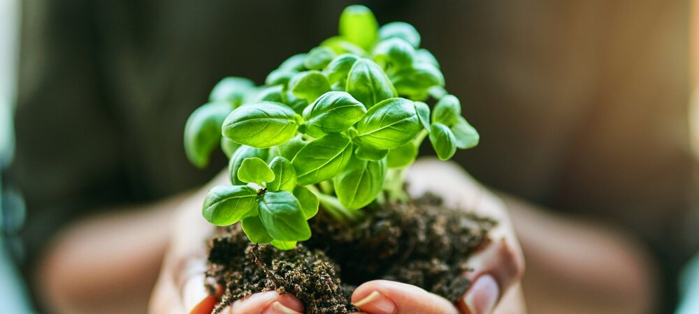 Person holding a plant in soil