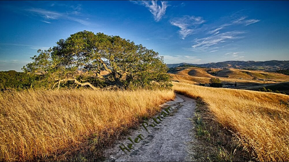 Crane Creek's walking trail surrounded by dry grass, trees and blue skies