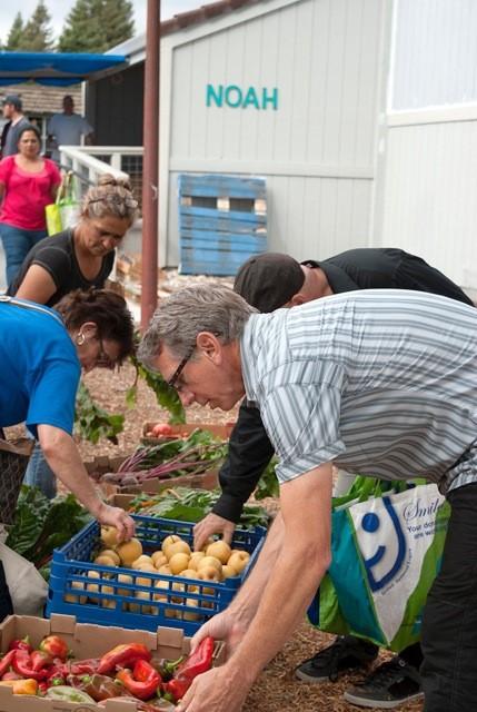 People picking through fruit