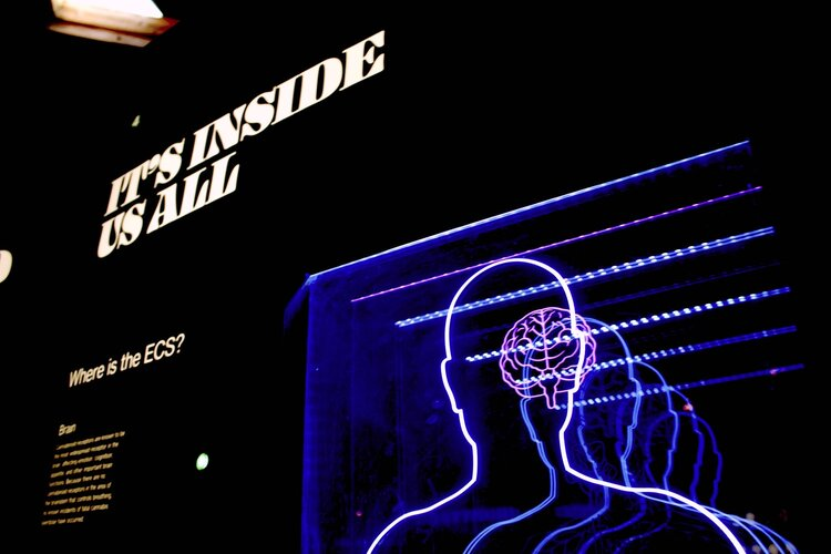 """A museum display of brain activity featuring an outline of a person and their brain using purple lights and the words """"It's Inside Us All"""""""