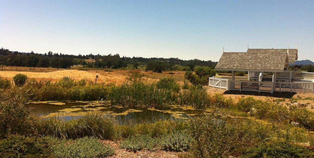 The Laguna de Santa Rosa on a sunny day