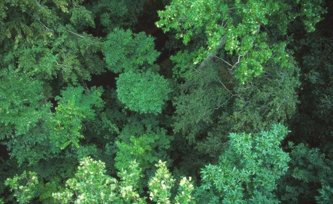 An aerial view of the top of green trees