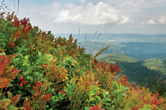 Colorful plants cascading on a mountainside with hills and clouds in the background
