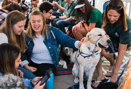 Students petting a therapy dog