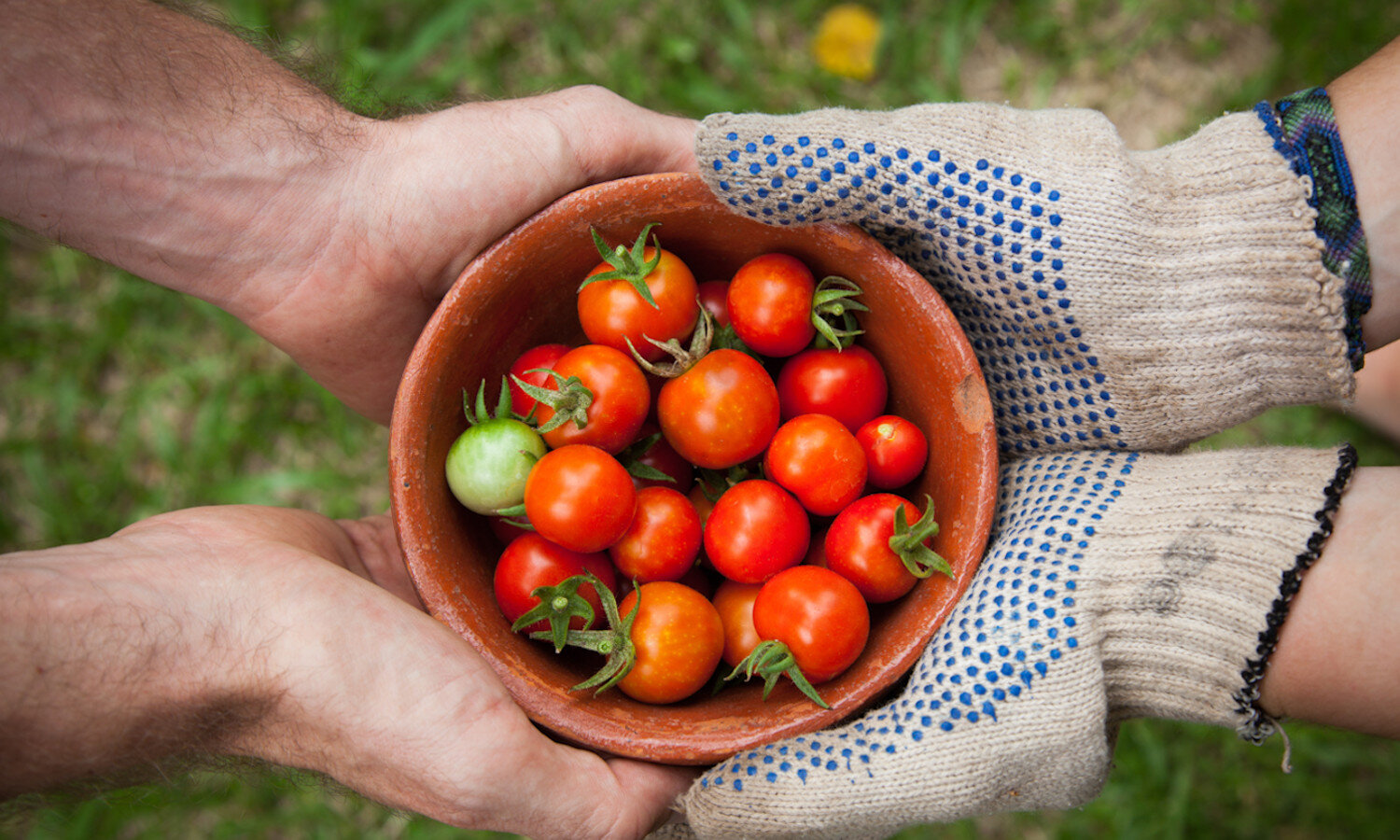 Two sets of hands holding a bowl of cherry tomatoes