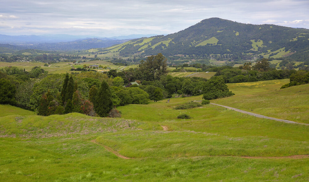 View of Sonoma Mountain from grassy green hills