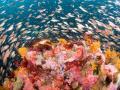 Cordell Bank Marine Sanctuary
